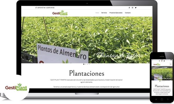 plantaciones de almendros y olivos en cordoba